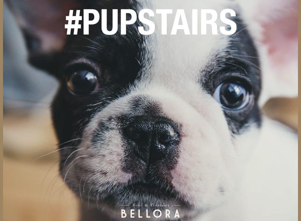 Premiär för Pupstairs på Bellora